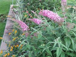 Mittendorf butterfly garden