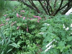 Stephenson shade garden